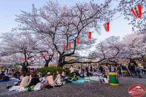Hanami at Ueno Koen