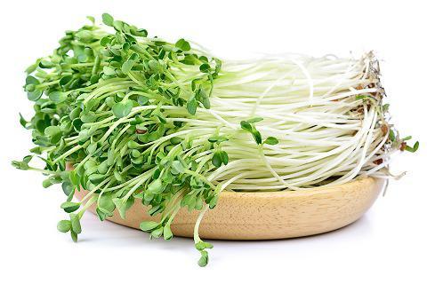 Rau mầm củ cải trắng Nhật