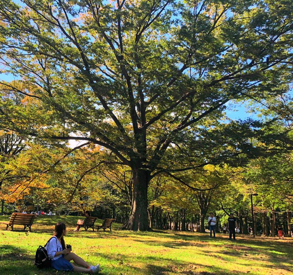 Công viên Yoyogi mùa lá vàng