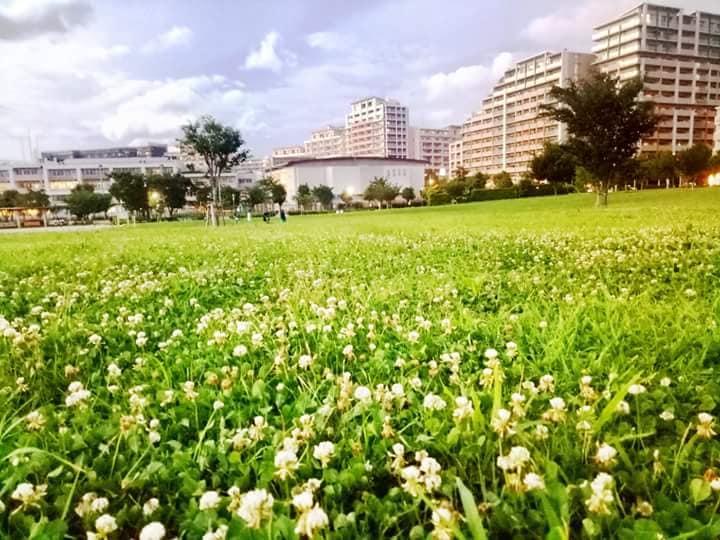 Công viên Sakura park gần ký túc
