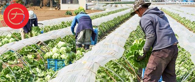 Du học Nhật Bản ngành Nông nghiệp – Chế biến thực phẩm, thủy hải sản